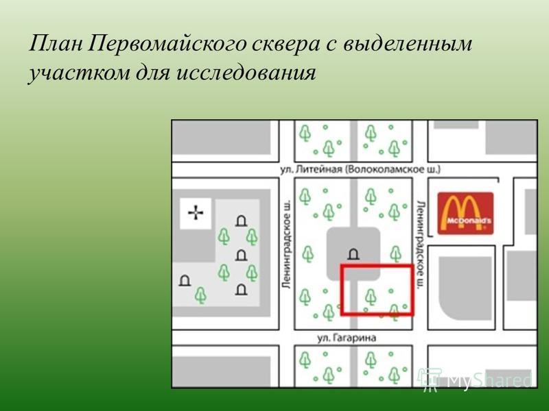 План Первомайского сквера с выделенным участком для исследования