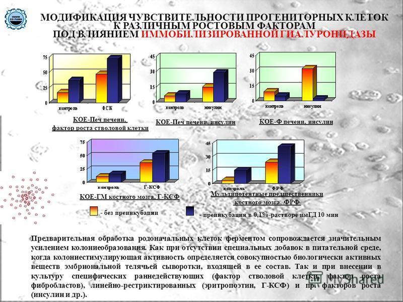 МОДИФИКАЦИЯ ЧУВСТВИТЕЛЬНОСТИ ПРОГЕНИТОРНЫХ КЛЕТОК К РАЗЛИЧНЫМ РОСТОВЫМ ФАКТОРАМ ПОД ВЛИЯНИЕМ ИММОБИЛИЗИРОВАННОЙ ГИАЛУРОНИДАЗЫ КОЕ-Печ печени, фактор роста стволовой клетки Мультипотентные предшественники костного мозга, ФРФ КОЕ-ГМ костного мозга, Г-К