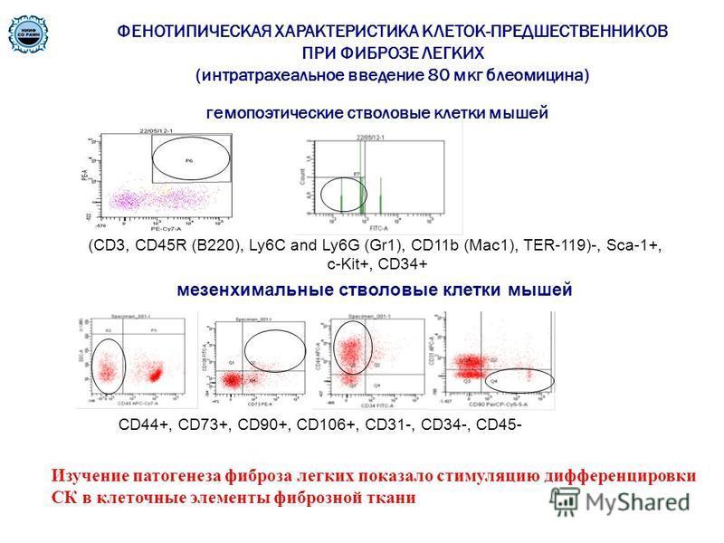гемопоэтические стволовые клетки мышей (CD3, CD45R (B220), Ly6C and Ly6G (Gr1), CD11b (Mac1), TER-119)-, Sca-1+, c-Kit+, CD34+ мезенхимальные стволовые клетки мышей CD44+, CD73+, CD90+, CD106+, CD31-, CD34-, CD45- ФЕНОТИПИЧЕСКАЯ ХАРАКТЕРИСТИКА КЛЕТОК