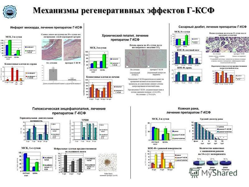 Механизмы регенеративных эффектов Г-КСФ