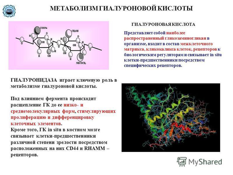 МЕТАБОЛИЗМ ГИАЛУРОНОВОЙ КИСЛОТЫ ГИАЛУРОНИДАЗА играет ключевую роль в метаболизме гиалуроновой кислоты. Под влиянием фермента происходит расщепление ГК до ее низко- и среднемолекулярных форм, стимулирующих пролиферацию и дифференцировку клеточных элем