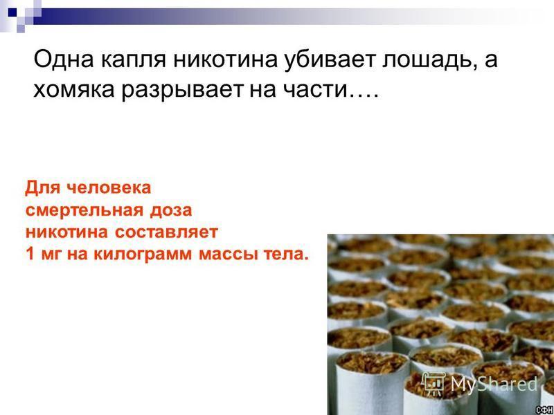 Одна капля никотина убивает лошадь, а хомяка разрывает на части…. Для человека смертельная доза никотина составляет 1 мг на килограмм массы тела.