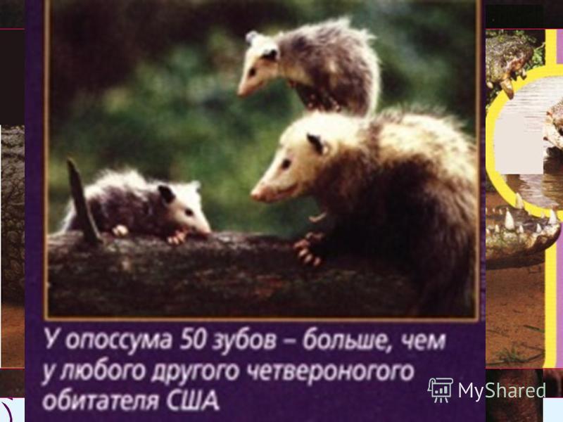 Зубастые животные.