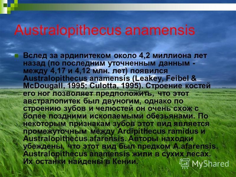 Australopithecus anamensis Вслед за ардипитеком около 4,2 миллиона лет назад (по последним уточненным данным - между 4,17 и 4,12 млн. лет) появился Australopithecus anamensis (Leakey, Feibel & McDougall, 1995; Culotta, 1995). Строение костей его ног