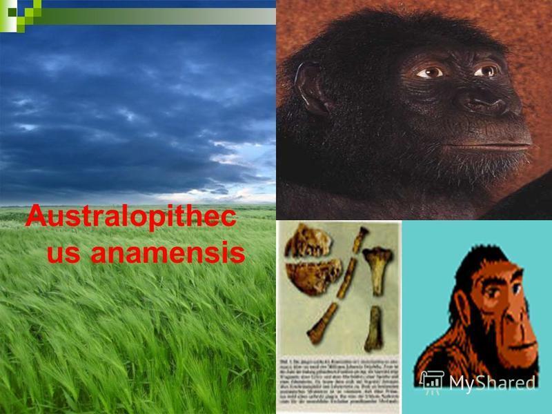 Australopithec us anamensis