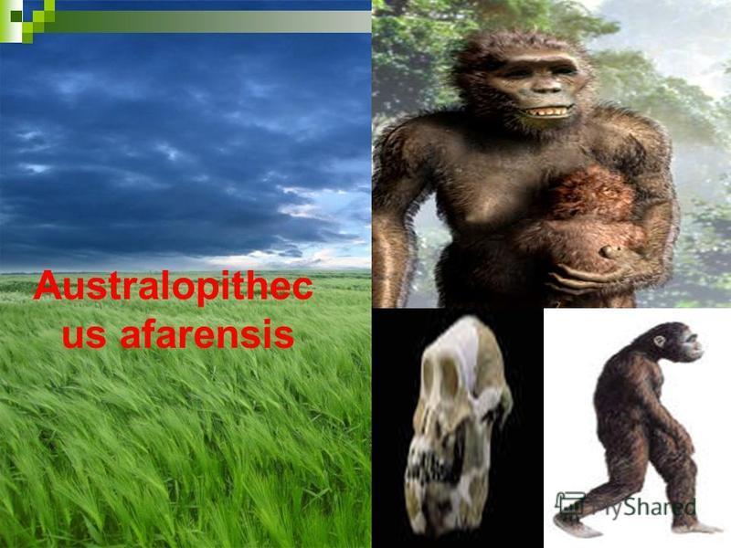 Australopithec us afarensis