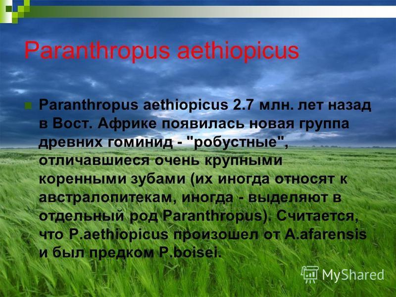 Paranthropus aethiopicus Paranthropus aethiopicus 2.7 млн. лет назад в Вост. Африке появилась новая группа древних гоминид -