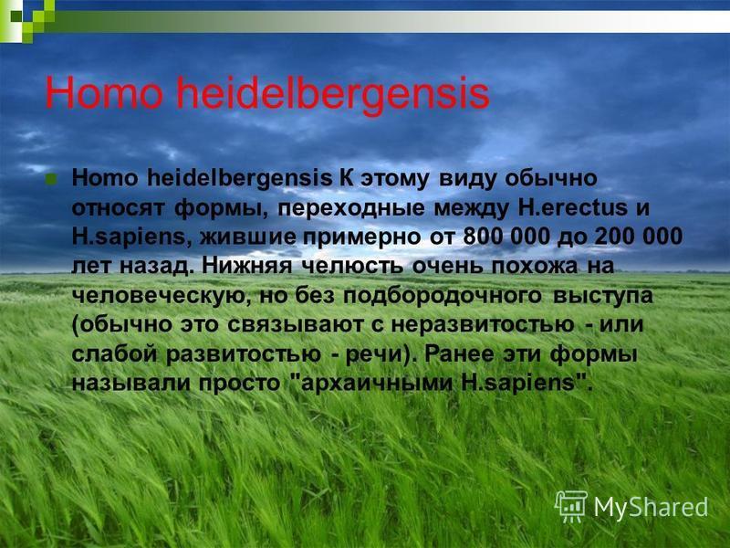 Homo heidelbergensis Homo heidelbergensis К этому виду обычно относят формы, переходные между H.erectus и H.sapiens, жившие примерно от 800 000 до 200 000 лет назад. Нижняя челюсть очень похожа на человеческую, но без подбородочного выступа (обычно э