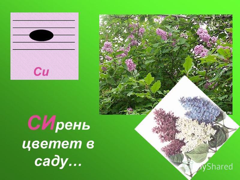 ___________________ Си СИ день цветет в саду…