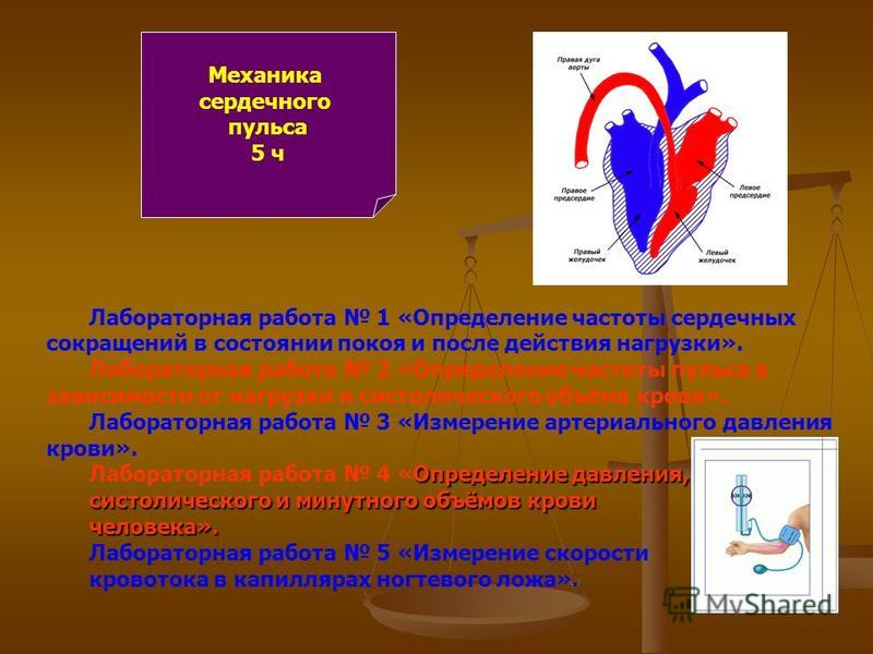 Механика сердечного пульса 5 ч Лабораторная работа 1 «Определение частоты сердечных сокращений в состоянии покоя и после действия нагрузки». Лабораторная работа 2 «Определение частоты пульса в зависимости от нагрузки и систолического объёма крови». Л