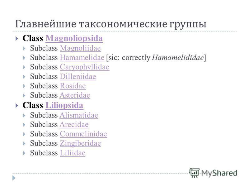 Главнейшие таксономические группы Class MagnoliopsidaMagnoliopsida Subclass MagnoliidaeMagnoliidae Subclass Hamamelidae [sic: correctly Hamamelididae]Hamamelidae Subclass CaryophyllidaeCaryophyllidae Subclass DilleniidaeDilleniidae Subclass RosidaeRo