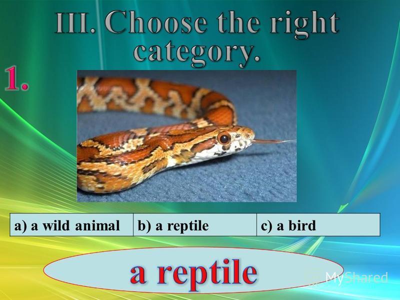 a) a wild animalb) a reptilec) a bird