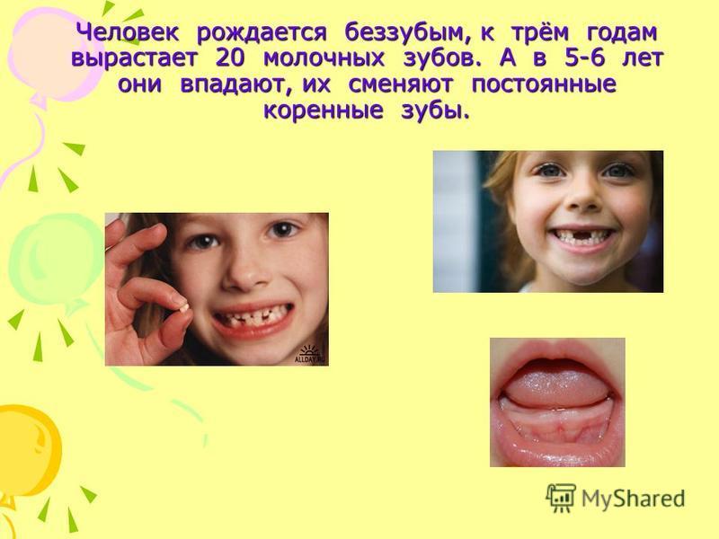 Человек рождается беззубым, к трём годам вырастает 20 молочных зубов. А в 5-6 лет они впадают, их сменяют постоянные коренные зубы.