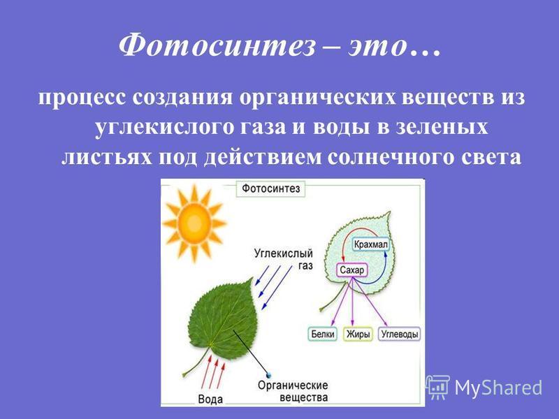 Фотосинтез – это… процесс создания органических веществ из углекислого газа и воды в зеленых листьях под действием солнечного света