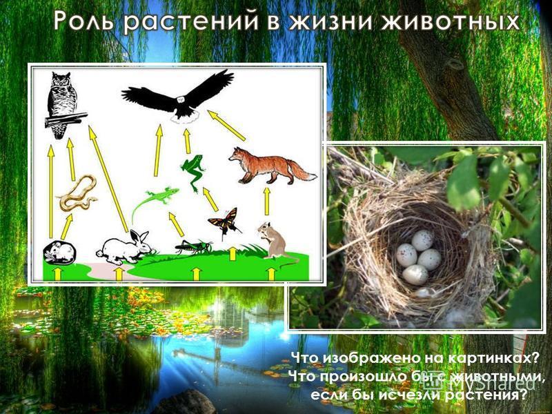 Что изображено на картинках? Что произошло бы с животными, если бы исчезли растения?