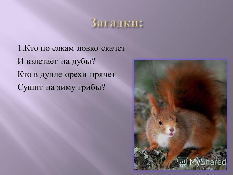 1. Кто по елкам ловко скачет И взлетает на дубы ? Кто в дупле орехи прячет Сушит на зиму грибы ?