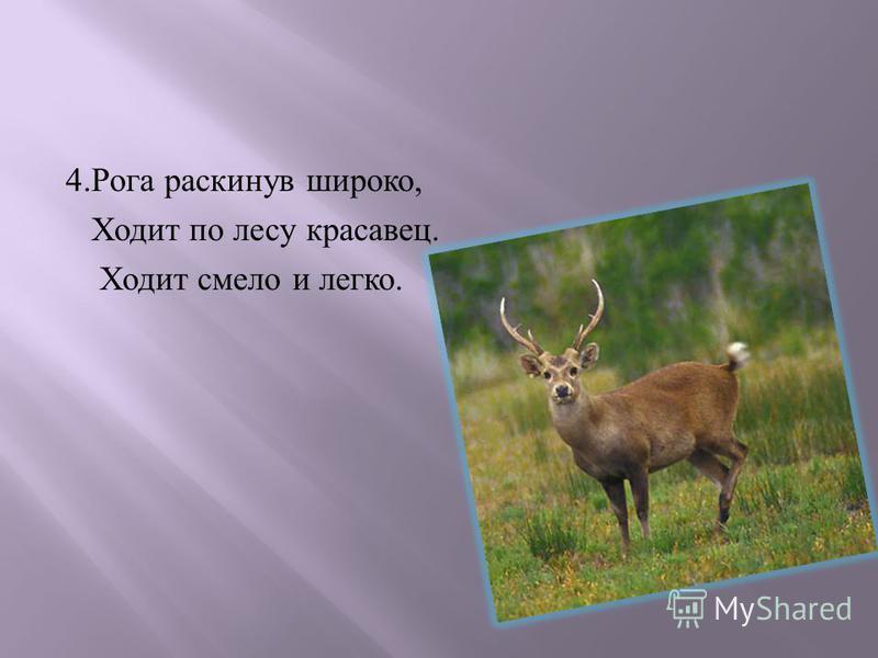 4. Рога раскинув широко, Ходит по лесу красавец. Ходит смело и легко.