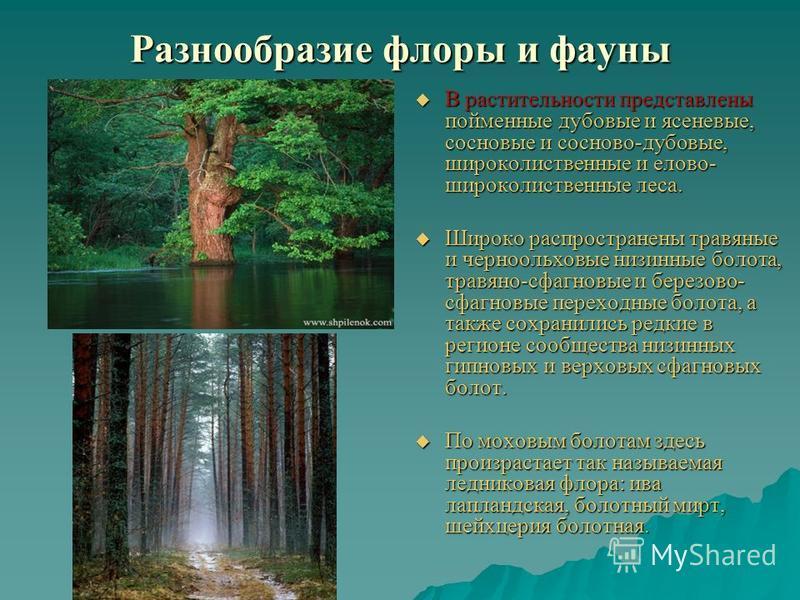 Разнообразие флоры и фауны В растительности представлены пойменные дубовые и ясеневые, сосновые и сосново-дубовые, широколиственные и елово- широколиственные леса. В растительности представлены пойменные дубовые и ясеневые, сосновые и сосново-дубовые