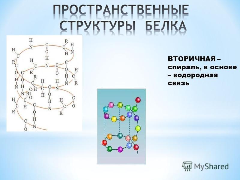 ВТОРИЧНАЯ – спираль, в основе – водородная связь