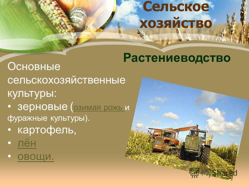 Сельское хозяйство Основные сельскохозяйственные культуры: зерновые ( озимая рожь и фуражные культуры). озимая рожь картофель, лён овощи. Растениеводство