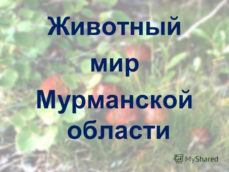 Животный мир Мурманской области