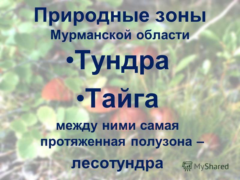 Природные зоны Мурманской области Тундра Тайга между ними самая протяженная полу зона – лесотундра