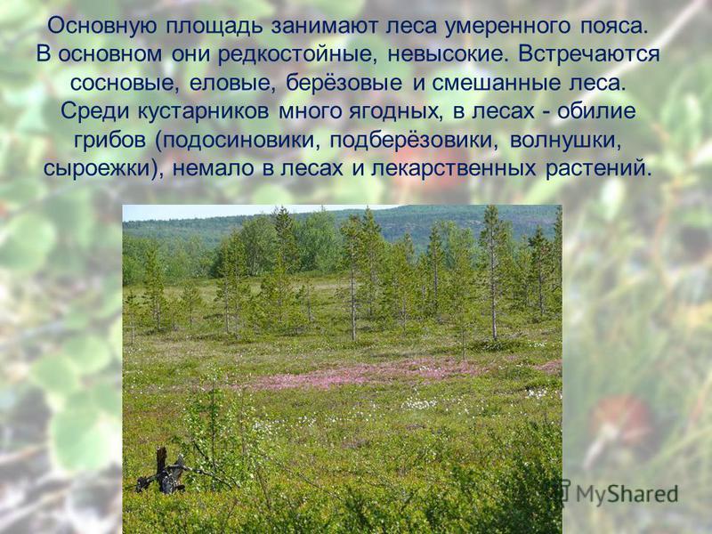 Основную площадь занимают леса умеренного пояса. В основном они редкостойные, невысокие. Встречаются сосновые, еловые, берёзовые и смешанные леса. Среди кустарников много ягодных, в лесах - обилие грибов (подосиновики, подберёзовики, волнушки, сыроеж