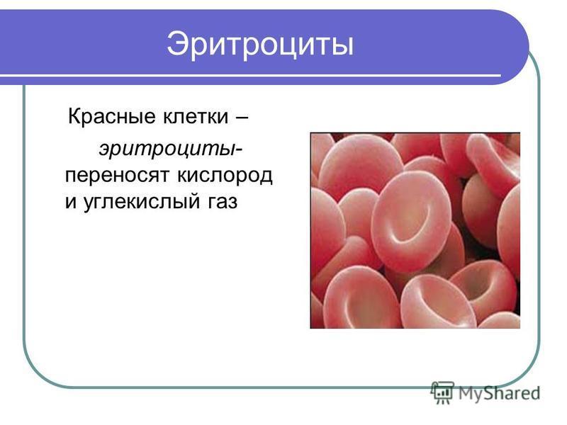 Эритроциты Красные клетки – эритроциты- переносят кислород и углекислый газ