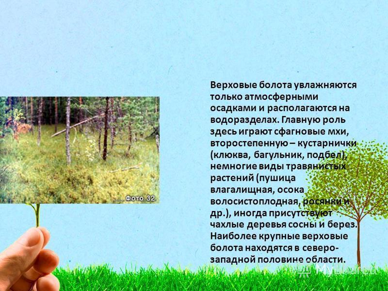Верховые болота увлажняются только атмосферными осадками и располагаются на водоразделах. Главную роль здесь играют сфагновые мхи, второстепенную – кустарнички (клюква, багульник, подбел), немногие виды травянистых растений (пушица влагалищная, осока