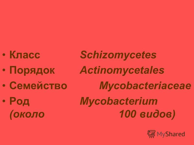 Таксономия и классификация микобактерий туберкулеза (МБТ) КлассSchizomycetes ПорядокActinomycetales СемействоMycobacteriaceae РодMycobacterium (около 100 видов)