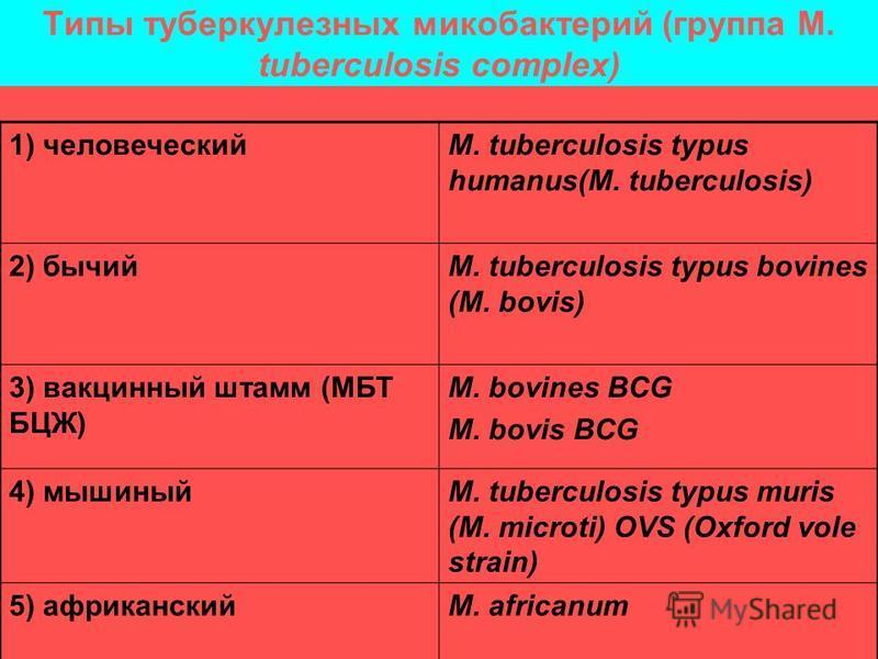 Типы туберкулезных микобактерий (группа M. tuberculosis complex) 1) человеческийM. tuberculosis typus humanus(M. tuberculosis) 2) бычийM. tuberculosis typus bovines (M. bovis) 3) вакцинный штамм (МБТ БЦЖ) M. bovines BCG M. bovis BCG 4) мышиныйM. tube
