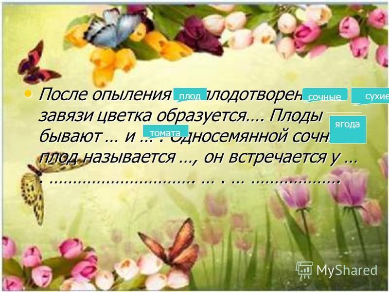 После опыления и оплодотворения из завязи цветка образуется…. Плоды бывают … и …. Односемянной сочный плод называется …, он встречается у …. …………………………. …. … ………………. После опыления и оплодотворения из завязи цветка образуется…. Плоды бывают … и …. Од