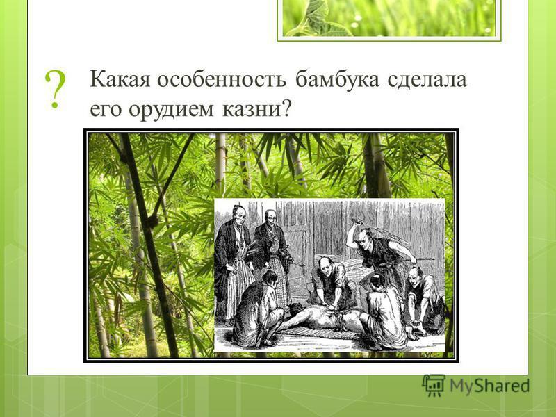 ? Какая особенность бамбука сделала его орудием казни?