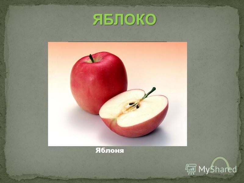 ЯБЛОКО Яблоня