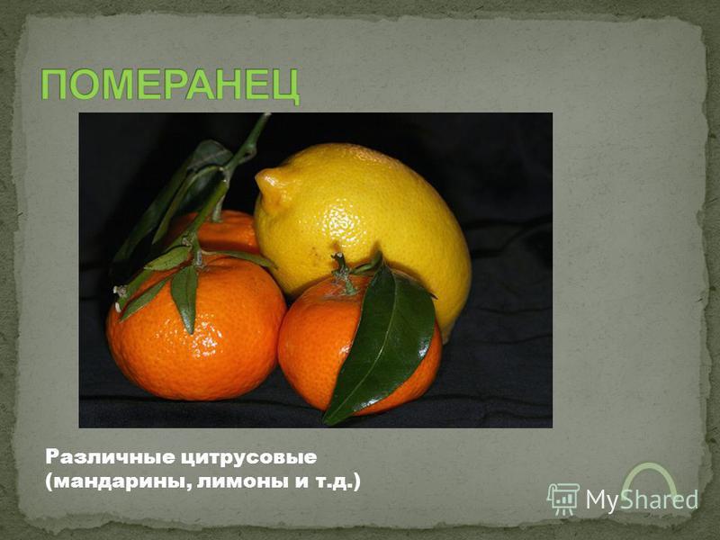 Различные цитрусовые (мандарины, лимоны и т.д.)