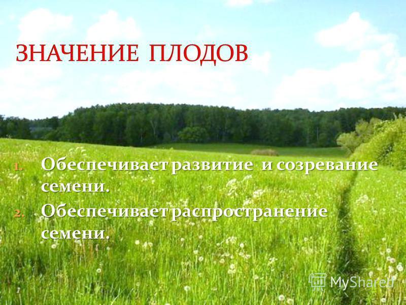 1. Обеспечивает развитие и созревание семени. 2. Обеспечивает распространение семени.