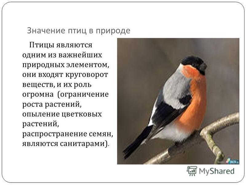Значение птиц в природе Птицы являются одним из важнейших природных элементом, они входят круговорот веществ, и их роль огромна ( ограничение роста растений, опыление цветковых растений, распространение семян, являются санитарами ).