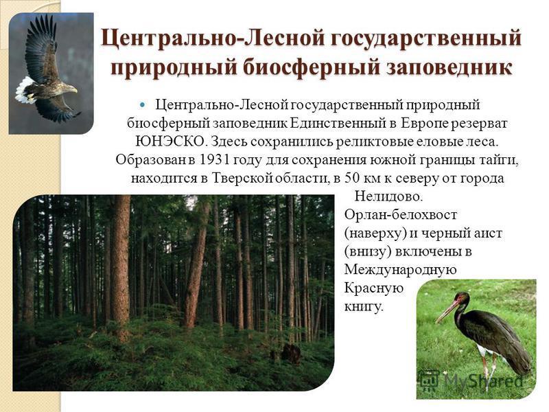 Центрально-Лесной государственный природный биосферный заповедник Центрально-Лесной государственный природный биосферный заповедник Единственный в Европе резерват ЮНЭСКО. Здесь сохранились реликтовые еловые леса. Образован в 1931 году для сохранения