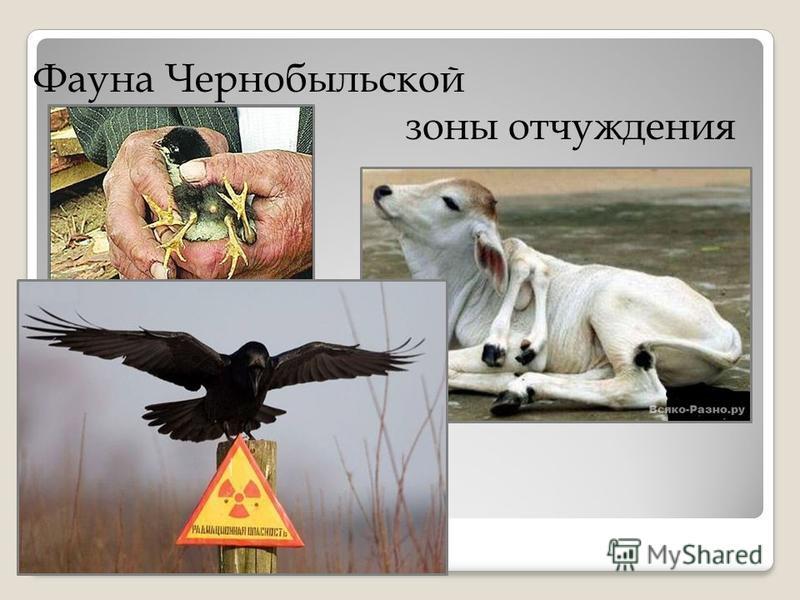 Фауна Чернобыльской зоны отчуждения