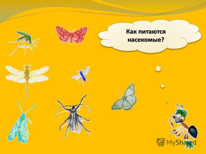 Многие насекомые летают – для этого у них есть крылья. Стрекоза может развивать скорость 40 км/ч. Некоторые насекомые ходят, прыгают, ползают. Кузнечик может прыгнуть на расстояние, в 20 раз превышающее длину его тела. А если он выпустит крылья, то у
