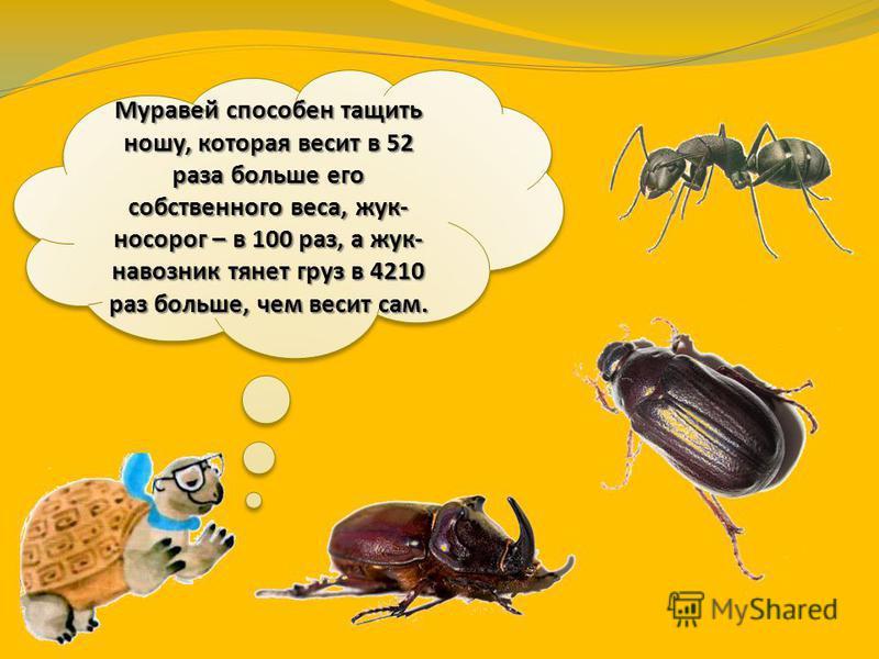 Многие насекомые – силачи. Стрекоза способна поднять вес в 10 раз больше собственного тела, пчела – в 20 раз, а майский жук – в 24 раза больше.
