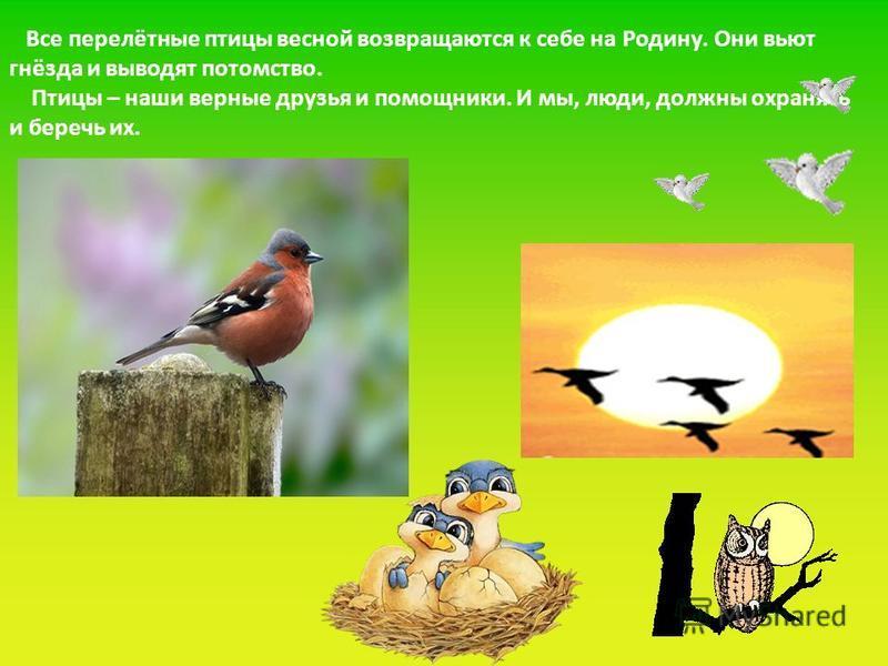Все перелётные птицы весной возвращаются к себе на Родину. Они вьют гнёзда и выводят потомство. Птицы – наши верные друзья и помощники. И мы, люди, должны охранять и беречь их.