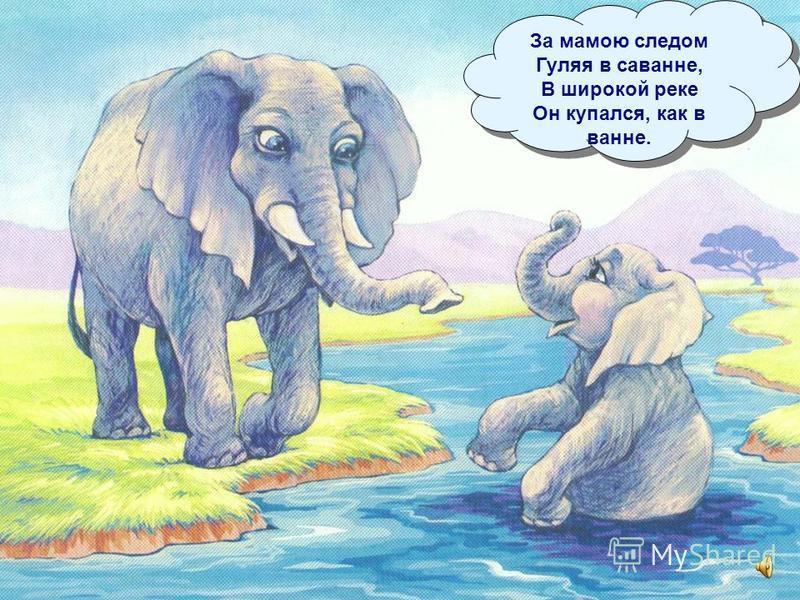 И чтобы слонёнок Не рос слабаком, Поила слониха его Молоком. И чтобы слонёнок Не рос слабаком, Поила слониха его Молоком.