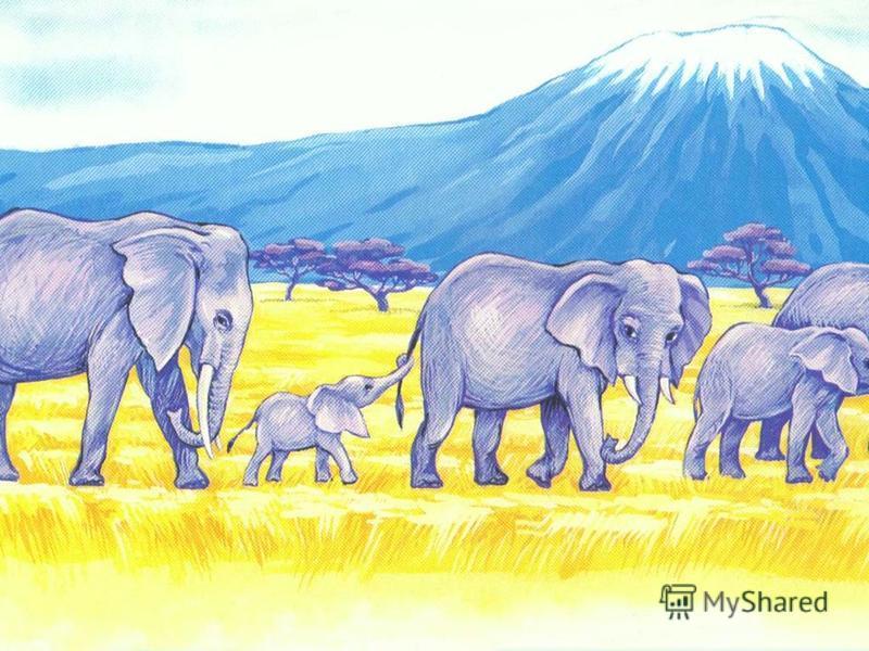 И чтобы слонёнок Не рос слабаком, Поила слониха его Молоком.