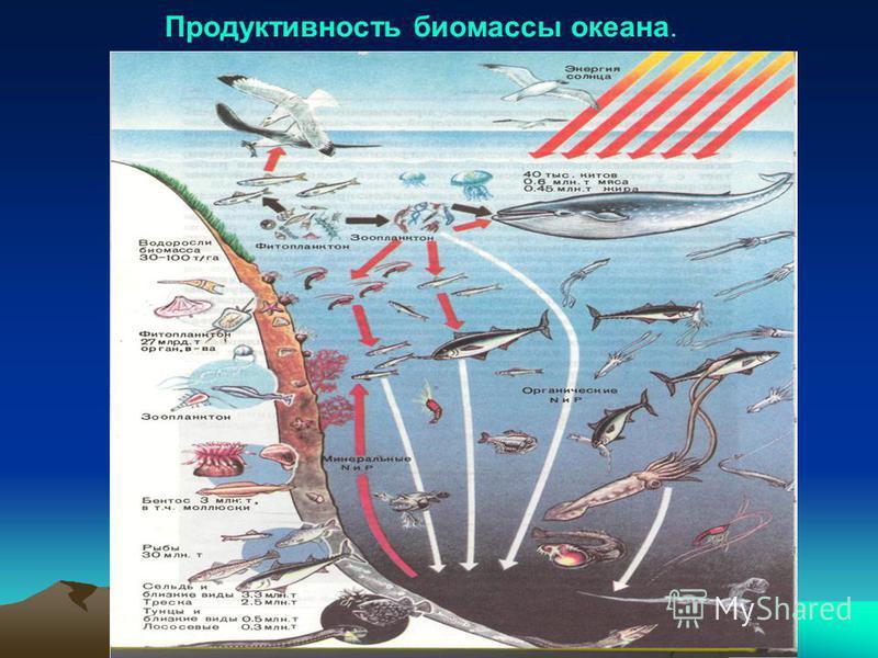 Продуктивность биомассы океана.