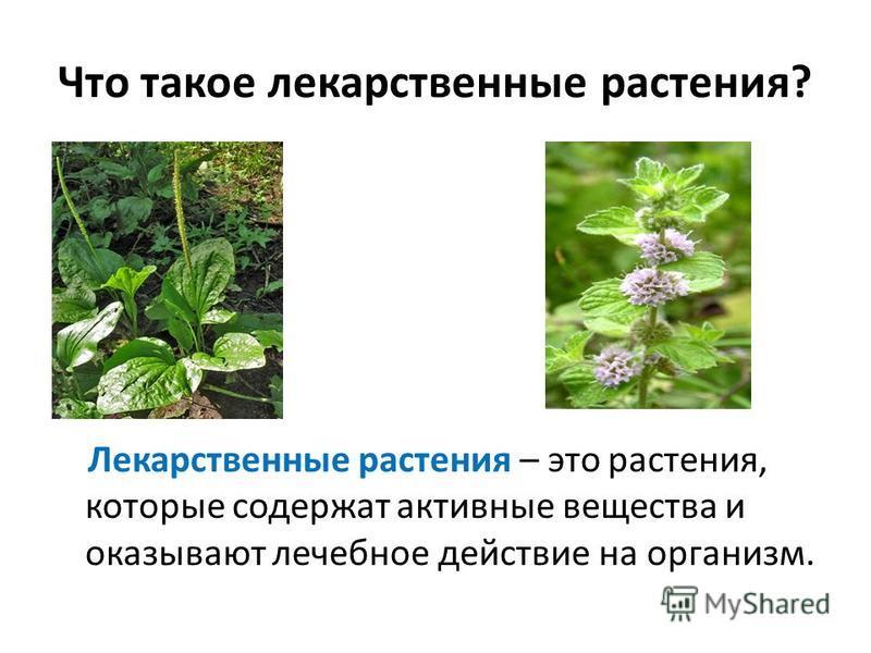 Что такое лекарственные растения? Лекарственные растения – это растения, которые содержат активные вещества и оказывают лечебное действие на организм.