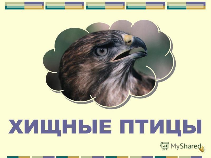 ВЫБИРАЙТЕ РАЗДЕЛ Хищные птицы Водоплавающие птицы Лесные птицы Эстетические виды