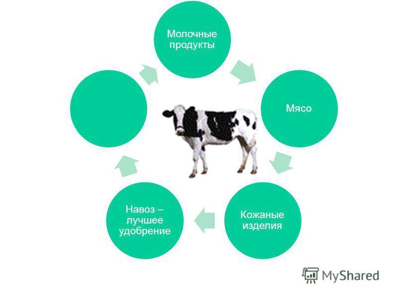 Молочные продукты Мясо Кожаные изделия Навоз – лучшее удобрение