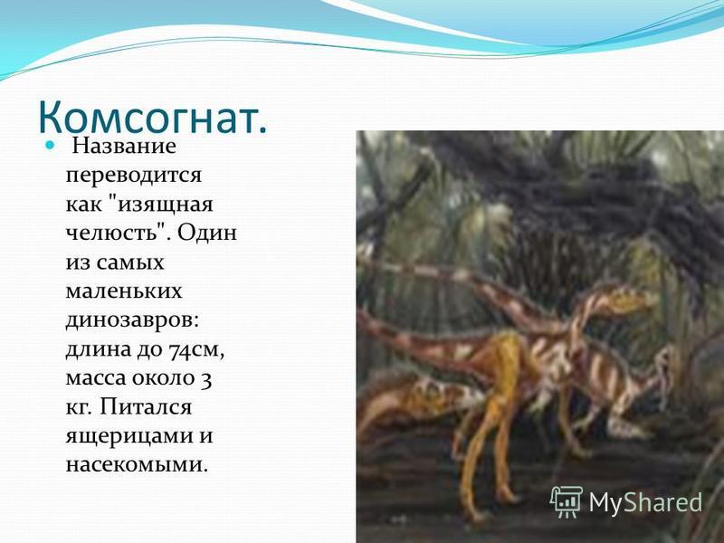 Комсогнат. Название переводится как изящная челюсть. Один из самых маленьких динозавров: длина до 74 см, масса около 3 кг. Питался ящерицами и насекомыми.