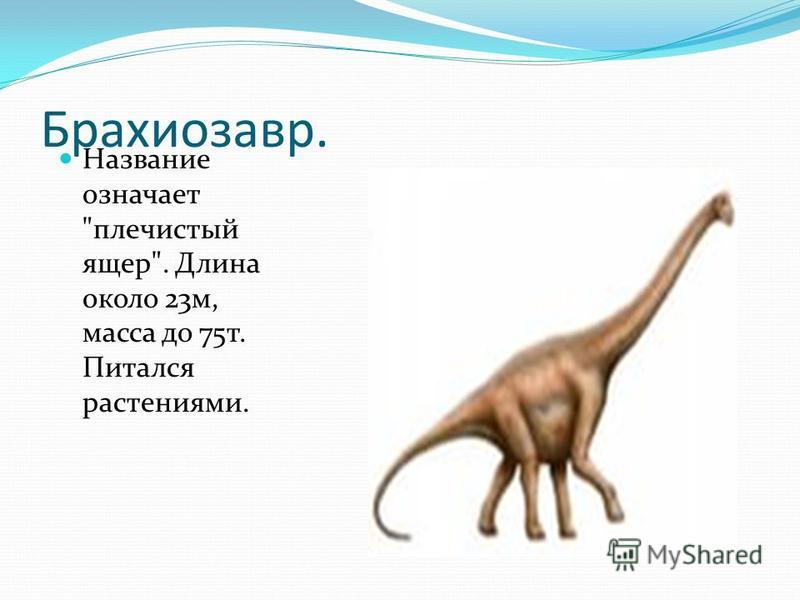 Брахиозавр. Название означает плечистый ящер. Длина около 23 м, масса до 75 т. Питался растениями.